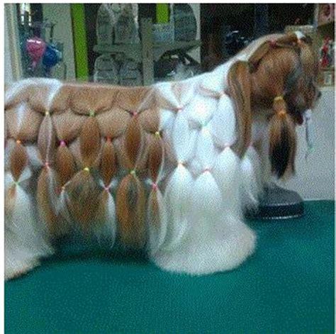 shih tzu braids shih tzu hair do rambo hair dos braids and cases