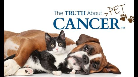 pet r the about pet cancer how to protect your pets trailer 2