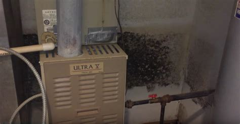 basement mold removal products attic mold vs ceiling mold vs basement mold mold removal