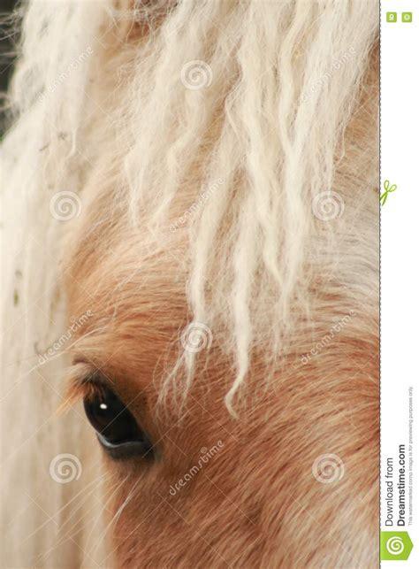 donna bionda con il cavallo immagine stock immagine cavallo biondo immagine stock immagine 10053531