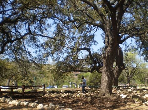 bullfrog creek mobile home park city needs help saving park trees from drought kut