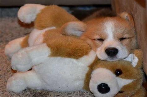 puppies snuggling these 12 beautiful pictures of puppies snuggling teddy bears will melt your
