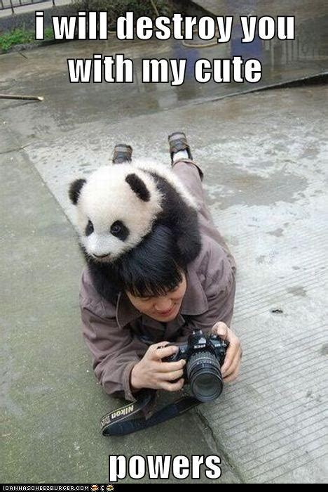 Cute Panda Memes - 10 april 2012 what about god