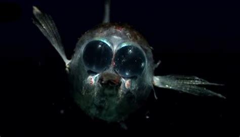 lade da terra led peces abismo taringa