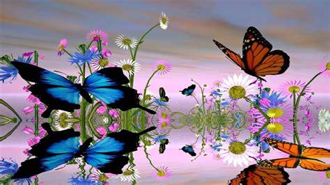fantastic butterfly screensaver httpwwwscreensavergift