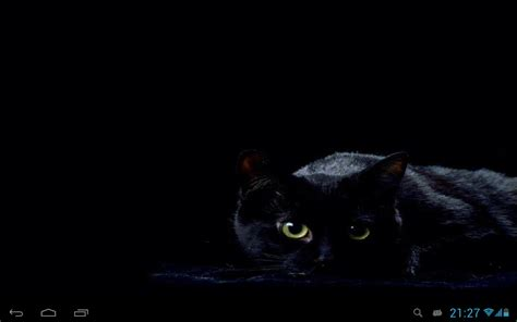 cat wallpaper note 3 black cats live wallpaper android apps on google play
