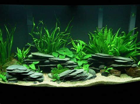 Aquascaping Cichlid Aquarium by Note 224 Moi M 234 Me Trouv 233 Des Roches Plates Fishies