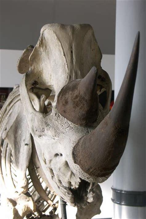 museum  natural history vertebrate skeleton system