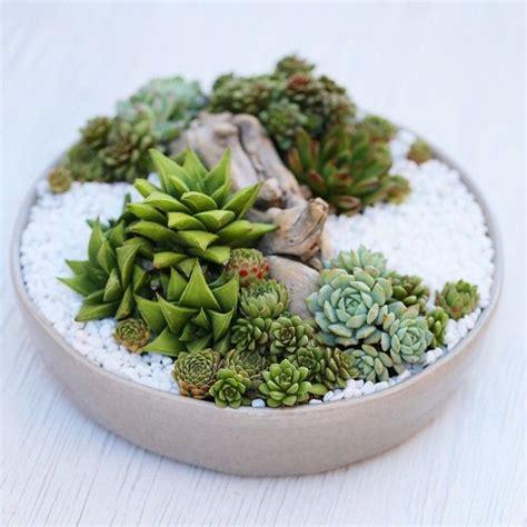 Succulent Dish Garden Ideas Zen Succulent Dish Garden By Dalla Vita Dalla Vita Designs Pinterest Dish Garden Dishes