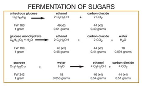 the gallery for gt yeast fermentation equation