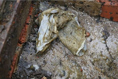 giant johnnyberg condom  fat mountains block sewers  couples flush tonnes  sex