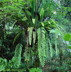 Plants From The Tropical Rainforest - rainforest plants and trees wallpaper