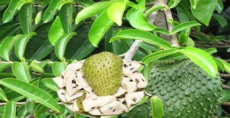 Obat Kanker Serviks Payudara Rahim Dan Prostat Herbal Alami Denature tanaman yang uh mengobati penyakit kanker artikel kanker