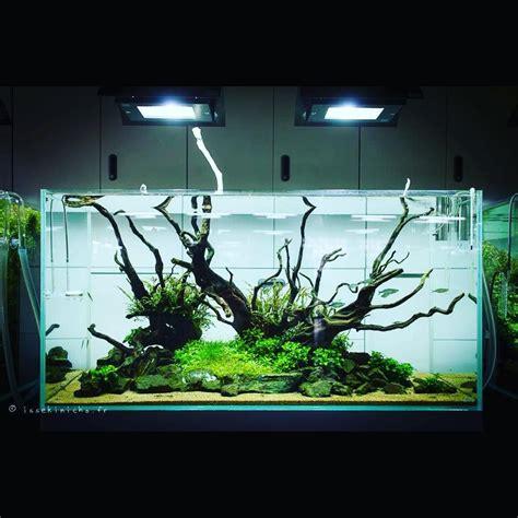 aquascape design software home design aquascaping planted aquascape aquascaping plants hardscape aqua design