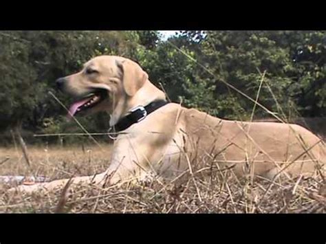how to your to attack on command how to your to attack on command for beginners funnydog tv