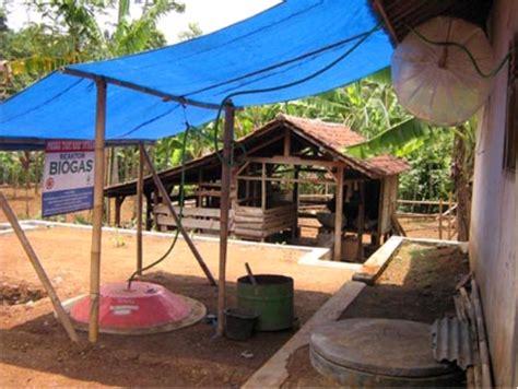 Bibit Sapi Fh sapi perah fh biogas dari kotoran sapi