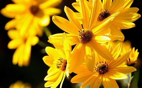 desktop wallpaper hd yellow yellow petals nature hd desktop wallpapers 4k hd