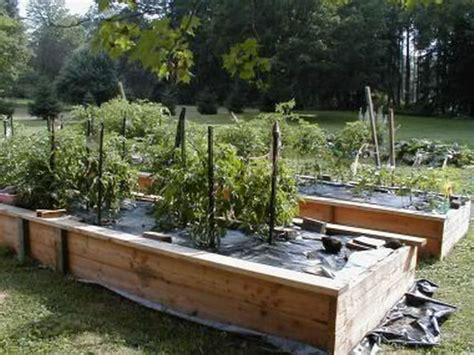 what to plant in raised garden beds fabulous raised bed garden plants raised planting beds how to build and maintain