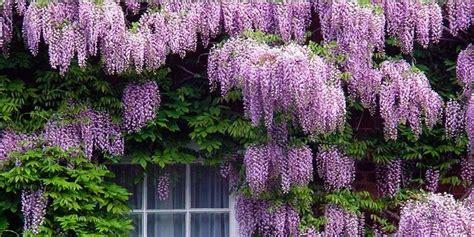 arbusti fioriti da giardino 5 arbusti meravigliosi per il vostro giardino best5 it