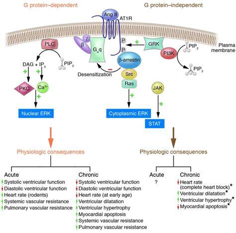 g protein q jci when 7 transmembrane receptors are not g protein