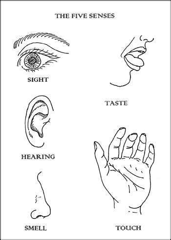 coloring pages five senses preschool 5 senses craft on senses preschool my five senses 23114