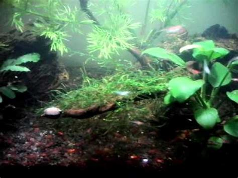 Aquascape 0 7 Co2 khanwarzahid doovi