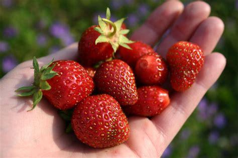 alimentos con mercurio el color turquesa propiedades y beneficios remedios