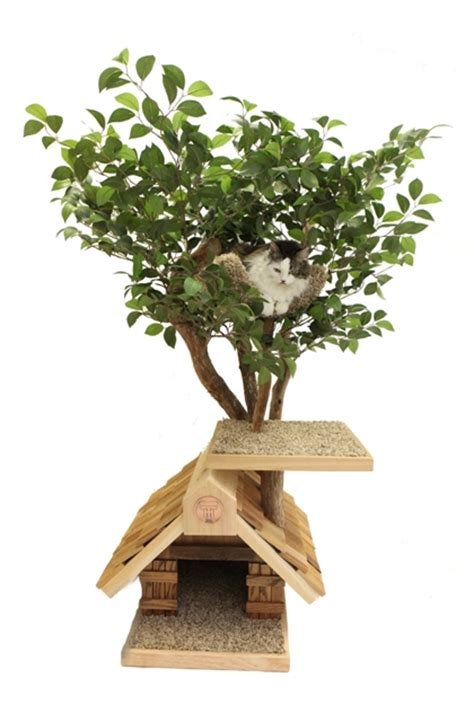 indoor cats can be tree climbers with treehouse cat trees
