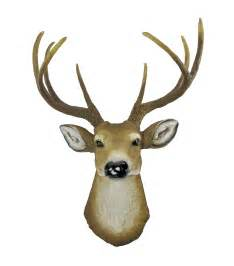Real Deer Head Wall Mount Buck Head Clipart Best