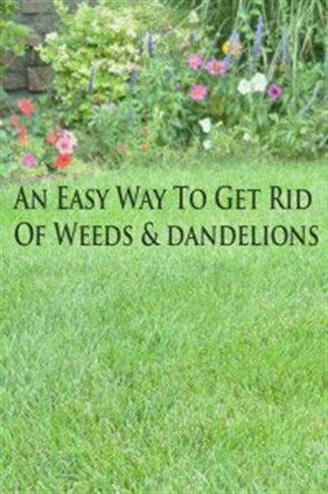how to get rid of weeds in flower beds 386 best yard flower bed ideas images on pinterest