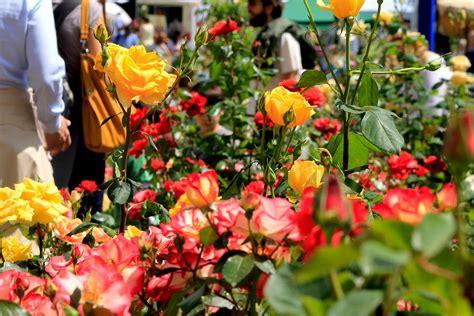 noale in fiore noale in fiore tutto pronto per l iniziativa la piazzaweb