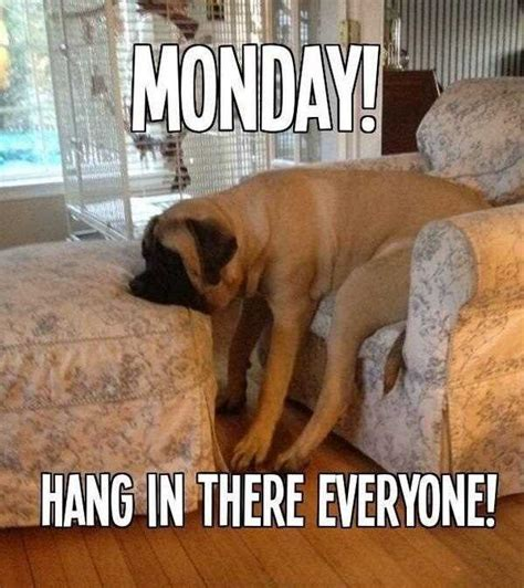 Monday Dog Meme - happy monday puppy meme memes