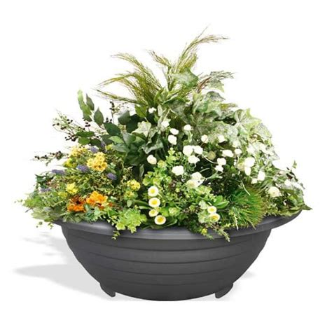 planter hanging baskets tree protection