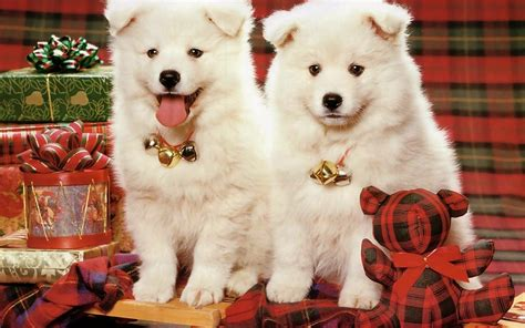 christmas wallpaper with puppies all new wallpaper my christmas gift for dog lovers wallpaper