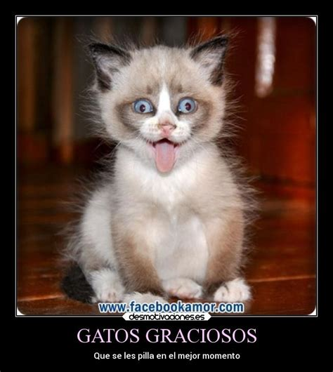 imagenes chistosas gatos gatos graciosos desmotivaciones
