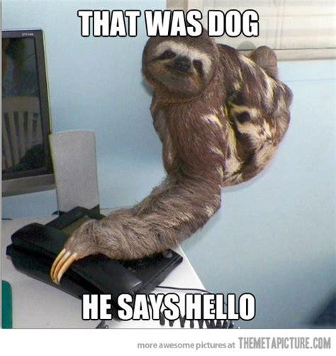 Dog On Phone Meme - funny sloth talking phone