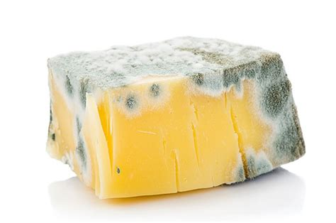 the cheese is old and moldy where is the bathroom moldy cheese www pixshark com images galleries with a