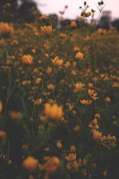 mandarin garden st peters mo