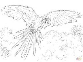 Blue Macaw Coloring Pages blue and yellow macaw coloring page free printable