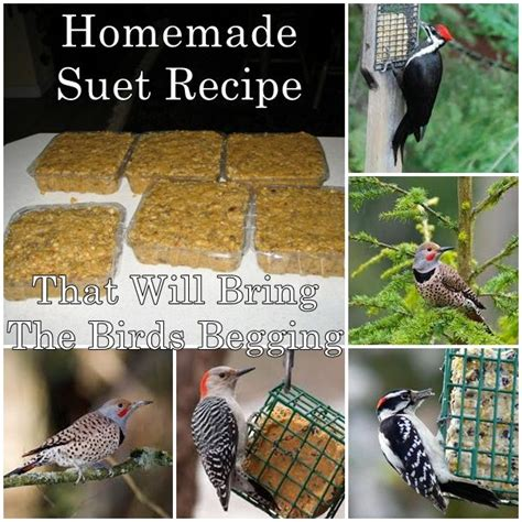 homemade suet recipe that will bring the birds begging