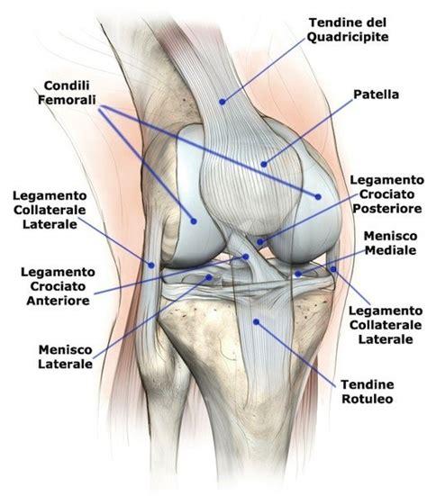 ginocchio dolore interno laterale lesione al menisco ginocchio mediale o laterale