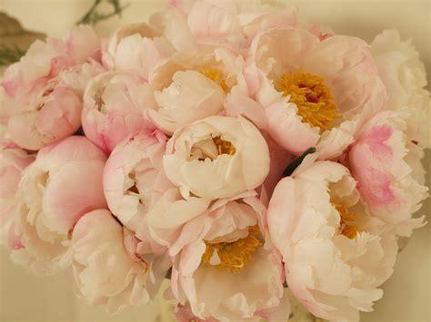 fiori bianchi per matrimonio i fiori piu belli per un matrimonio silviadeifiori