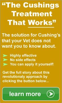 cushing s disease in dogs treatment 1000 images about frankie on r arthritis and for dogs