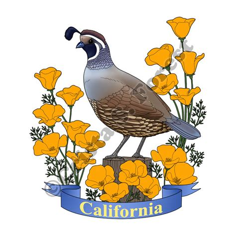 forest wildlife art california state bird and flower