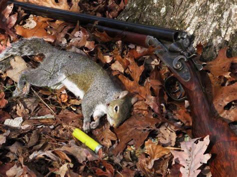 backyard squirrel hunting squirrel hunting bing images