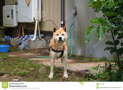japanese dog house japanese dog royalty free stock photo image 912145