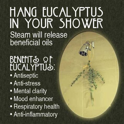 hang eucalyptus in your shower healthy
