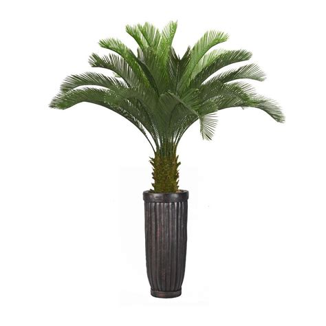 Palm Tree Planters by 69 In Cycas Palm Tree In Planter