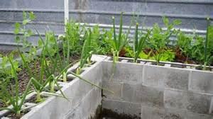 How To Build A Raised Garden With Concrete Blocks - cinderblock raised beds gardening pinterest