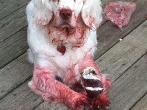 rabid puppies best or rabid costume dunedin fl patch